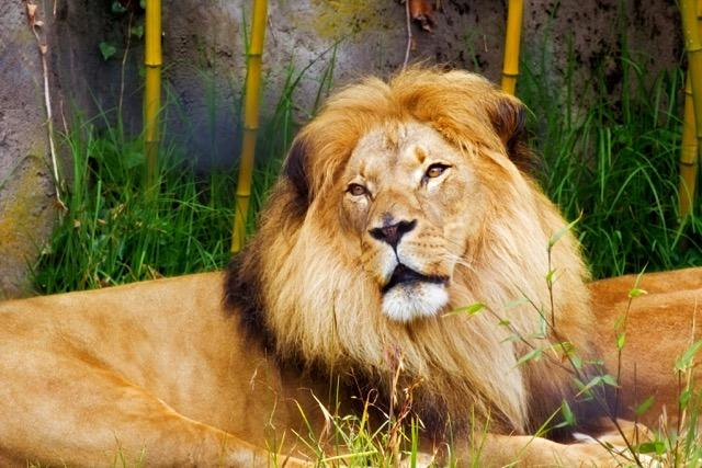 The Lion of Judah – 4 part series